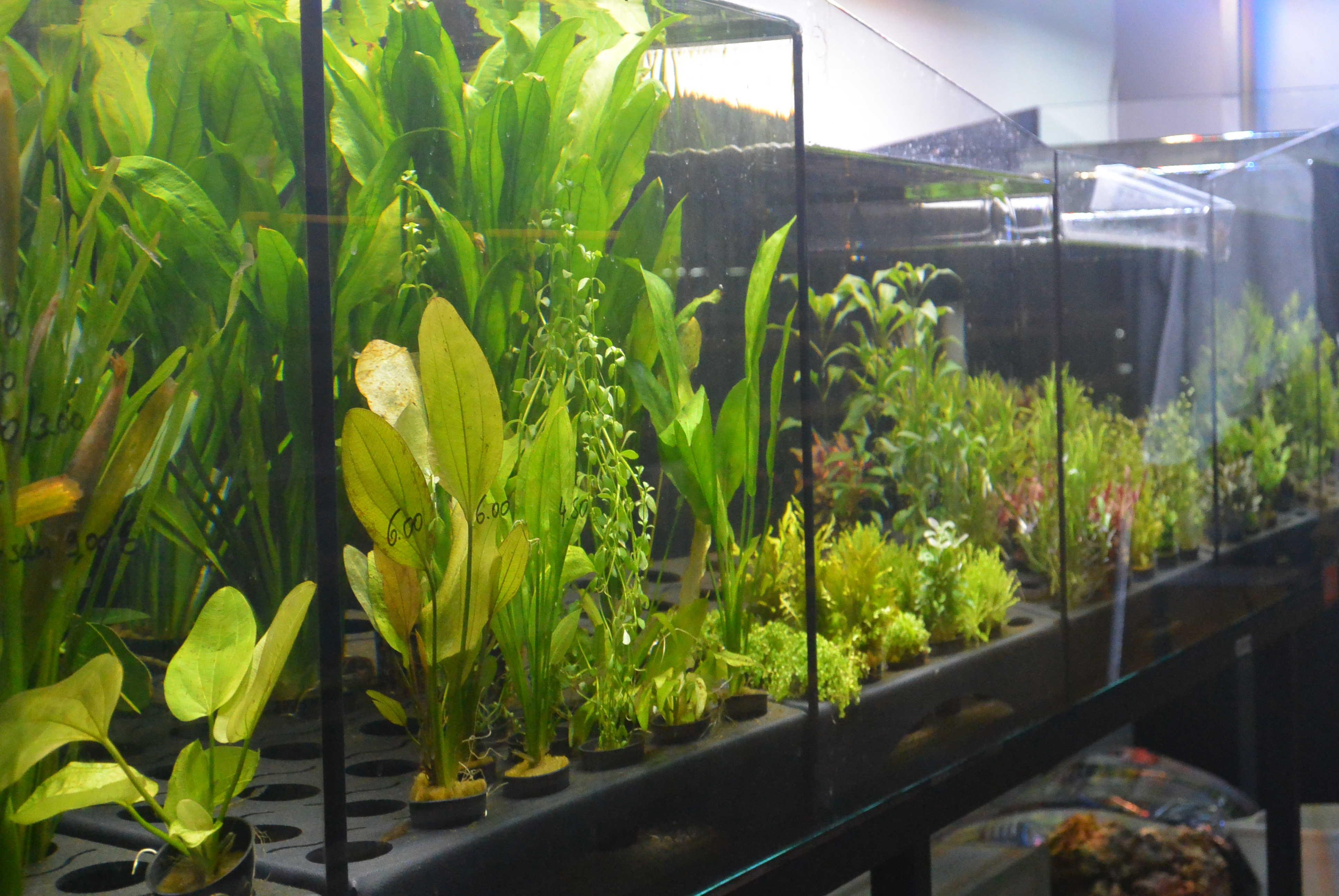 Vissen en plantjes   desiervisvriend.be